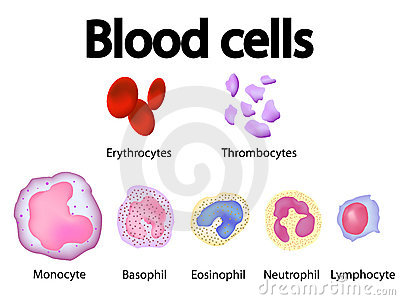 All blood cells scientific overview vector image