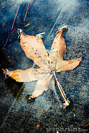 Yellow Autumn Leaf in a Puddle
