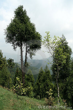 Trees on Mountain Slope