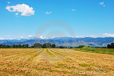 Field with View of the Rocky Mountains
