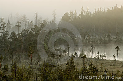 Hazy distance in forest bog