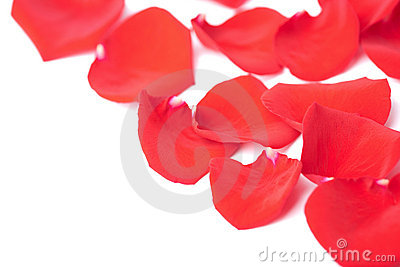 Red rose petals isolated