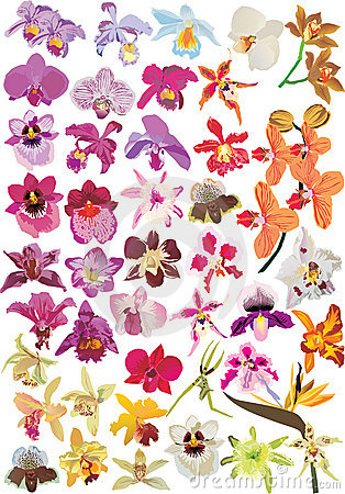 Large orchid collection
