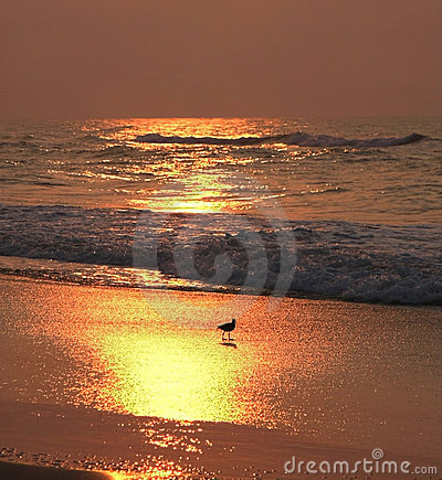 Shore bird at sunrise