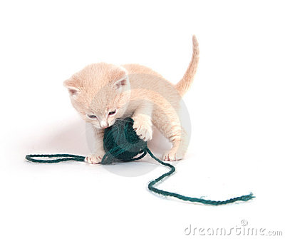 Kitten playing with green yarn