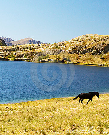Black horse near lake