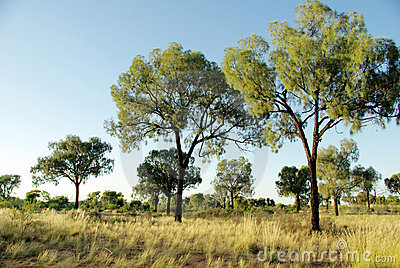 Vegetation in desert - Australia