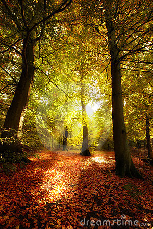 Forest sunrise in autumn