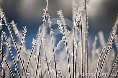 Beautiful closeup of ice crystals on grass
