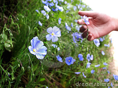 Hand Picking Wildflowers
