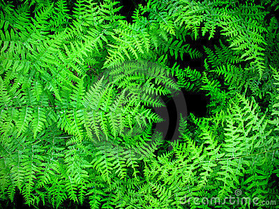 Lush Green Ferns