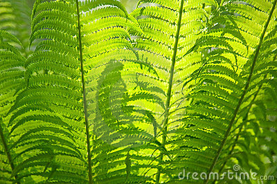 Fern as a background