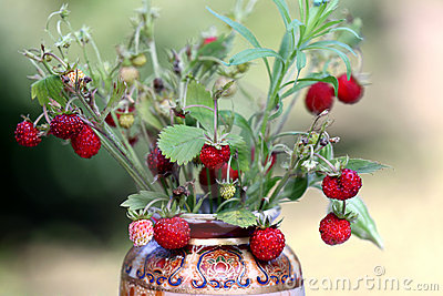 Wild strawberry bouquet