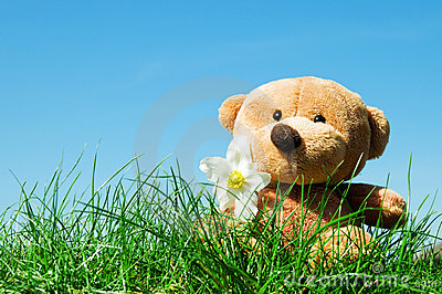 Teddy bear on grass