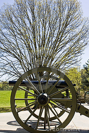 Cannon and Tree
