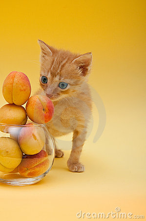 Orange kitten with an apricots