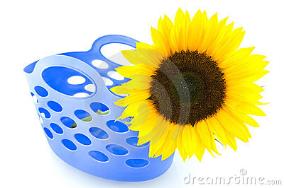 Yellow sunflower in blue shopping bag