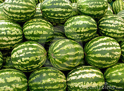 Water melons