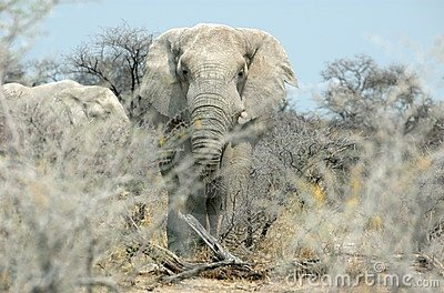 Face-to-face with an elephant