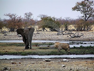 Elephant vs lion