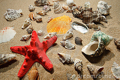 Tropical shells and star-fish