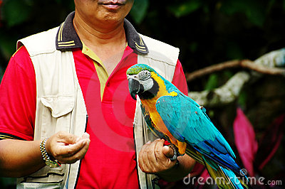 Man holding a parrot
