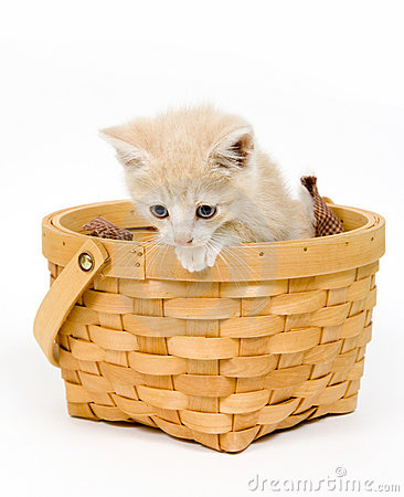 Kitten in a basket on white background