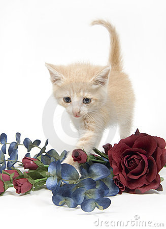 Kitten and flowers on white background