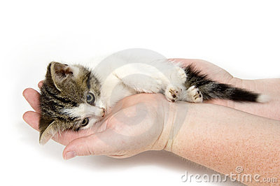 Hands holding a tired kitten on white background