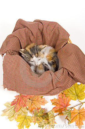 Kittens in a basket with fall leaves