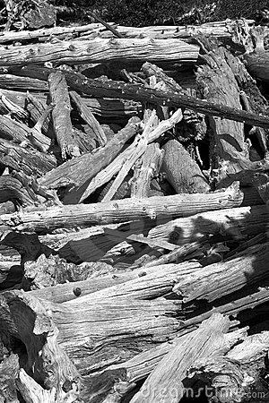 Black and white logs