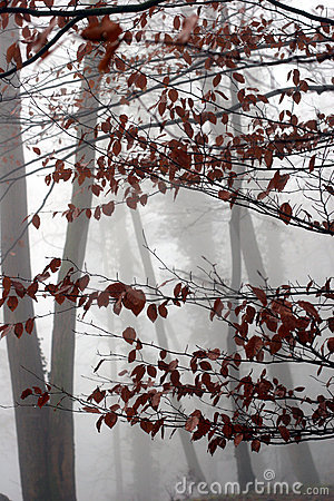 Trees and forest winter