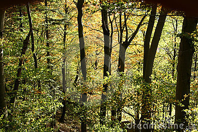 Trees and forest autumn