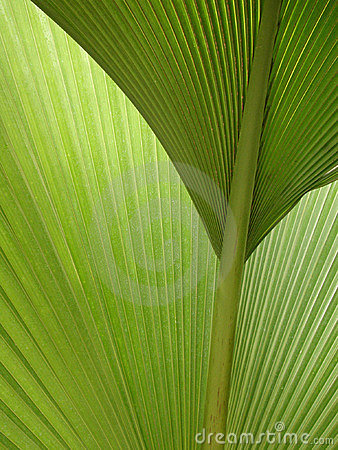 Semi-abstract green palm fronds