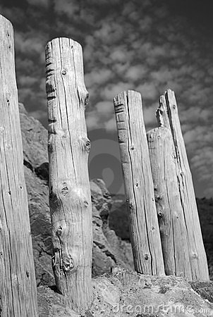 Stumps in Monochrome