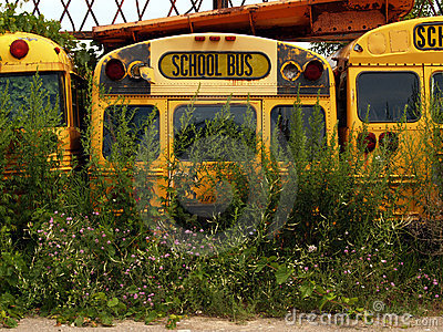 Old School Buses with Weeds