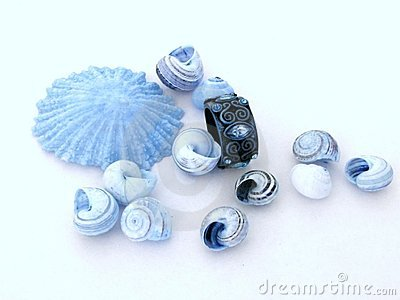 Shells and ring 1