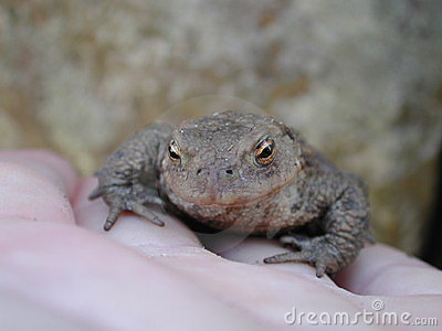 Holding a toad (prince?)