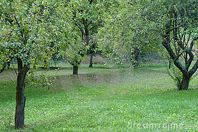 Meadow and plumtrees