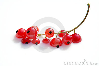Bathing red berries