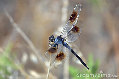 Dragonfly 02