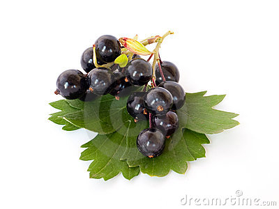 Black currant with leaves.