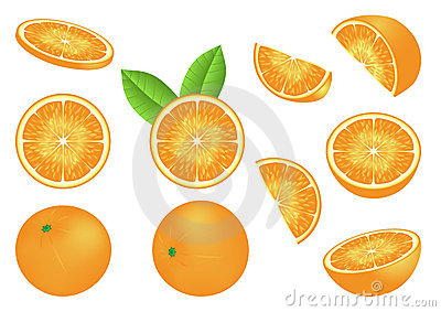 Vector image with isolated oranges