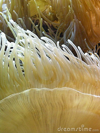 Yellow Coral Reef
