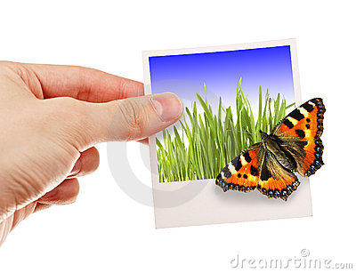 Photo with butterfly