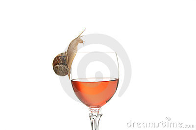 Snail drinking alcohol