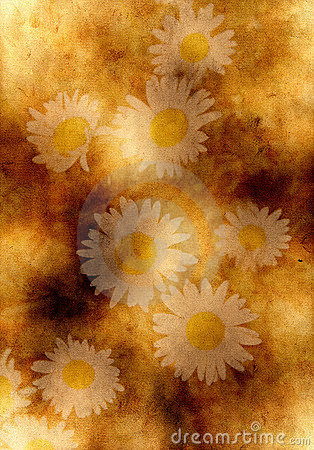 Old yellow paper background with camomile