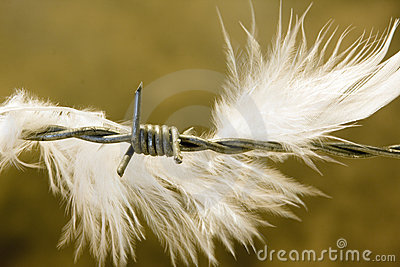 Feather on wire