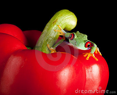 Red eyed frog on red pepper