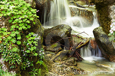 Mountain stream and spring forest flowers